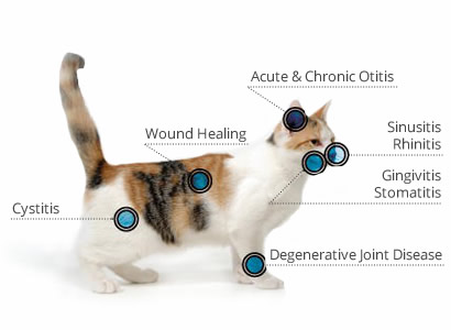 cat laser pain relief