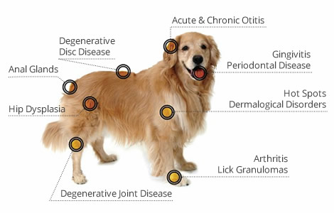 dog laser pain relief